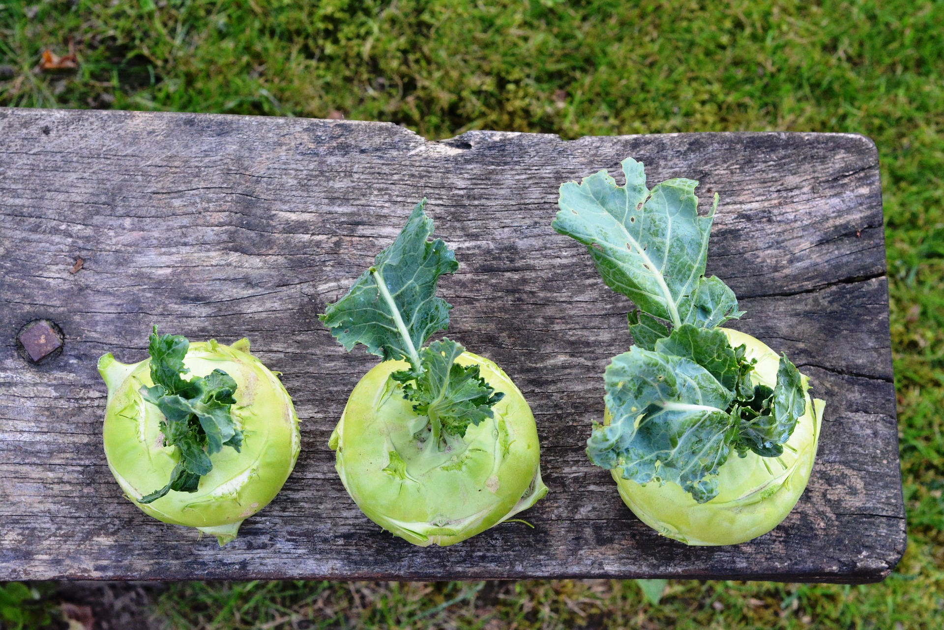 Koolrabi en komkommer